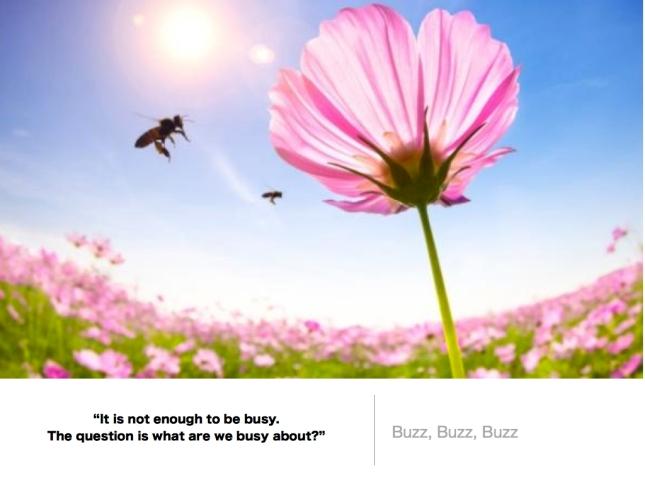 501 Buzz Buzz.618